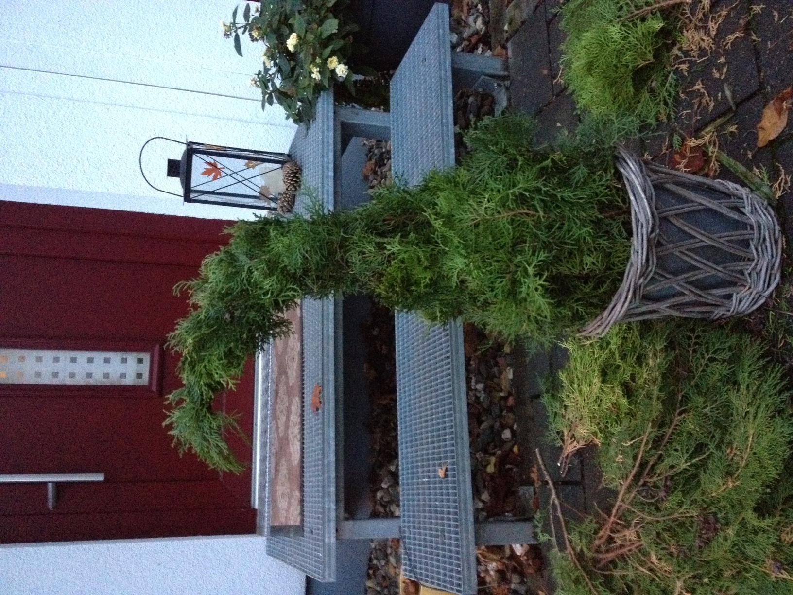 weihnachtsbaum aus lebensbaum thuja vorstadt tr ume. Black Bedroom Furniture Sets. Home Design Ideas